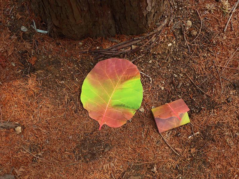 나뭇잎 편지지 - 아브젝시옹, 3,000원, 편지지, 심플 편지지