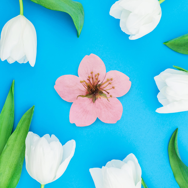 사과꽃 카드 세트 Apple Blossom Card SET - 아브젝시옹, 2,500원, 카드, 디자인 카드